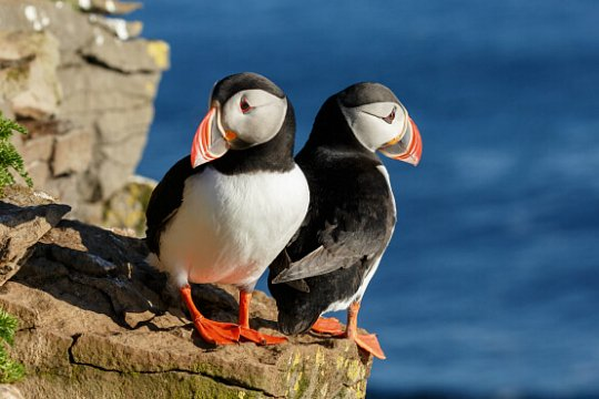 Birds In Ireland